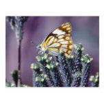Una vida hermosa de las mariposas postal