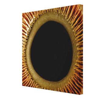 Una vista de la superficie interna del iris lona envuelta para galerías