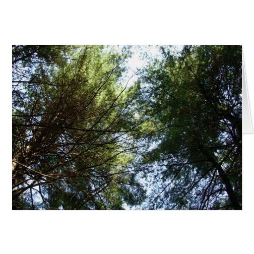 Una vista de los tops del árbol tarjeta de felicitación
