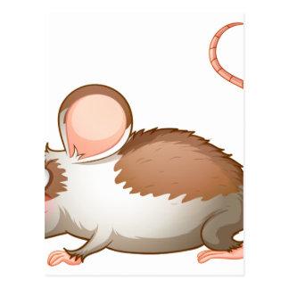 Una vista lateral de una rata tarjetas postales