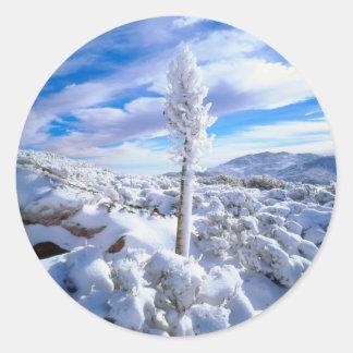 Una yuca nevada pegatina redonda