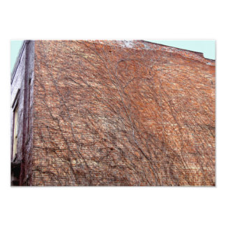 Unbloomed Ivy on Old Building in Albany New York Photo Print