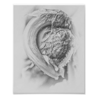 Uncurling Woodland Fern Black and White Print 3