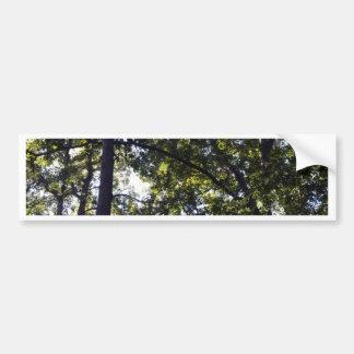 Under Oak Trees Bumper Sticker