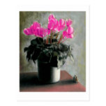 Under The Cyclamen Postcards