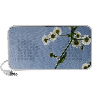 Under the daisies laptop speaker