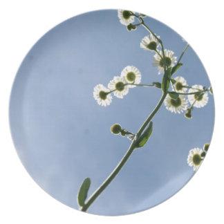 Under the daisies melamine plate