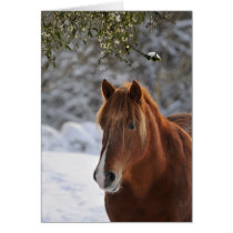 Under the mistletoe, horse Christmas Card