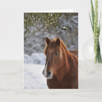 Under the mistletoe, horse Christmas Holiday Card