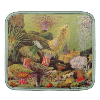 Under The Sea Antique Sleeves For iPads