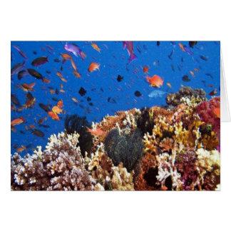 Under the sea aquatic fish scenes cards
