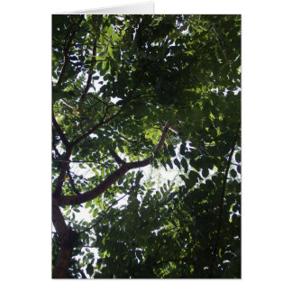 Under the Shade Tree Card