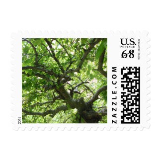 Under the Trees Stamp