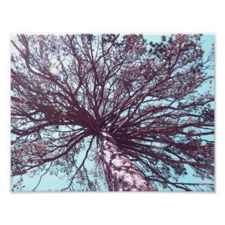 Under Tree Photo Print