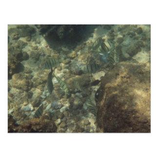 Under Water Greetings Postcard