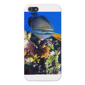 Under water iPhone 5 cases