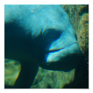 Under Water Manatee  Poster