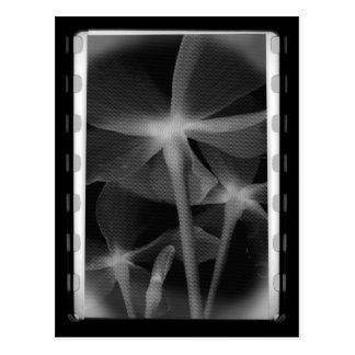 Underneath Flowers - Infrared B&W Negative Postcard