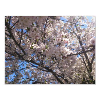 Underneath the Cherry Blossom Art Photo