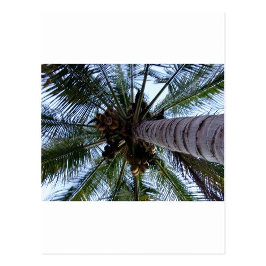 Underneath the Palm Postcard