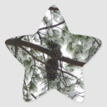 Underneath the Snow Covered Pine Star Sticker