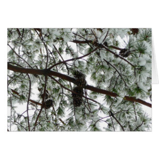 Underneath the Snow Covered Pine Tree Winter Photo Card