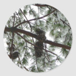 Underneath the Snow Covered Pine Tree Winter Photo Classic Round Sticker