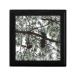 Underneath the Snow Covered Pine Tree Winter Photo Gift Box