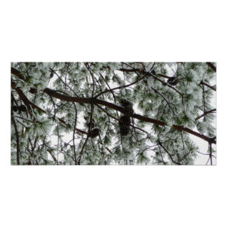 Underneath the Snow Covered Pine Tree Winter Photo Poster