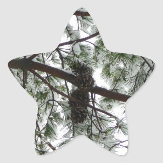 Underneath the Snow Covered Pine Tree Winter Photo Star Sticker
