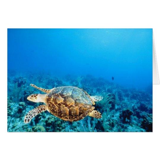 Undersea Turtle Card