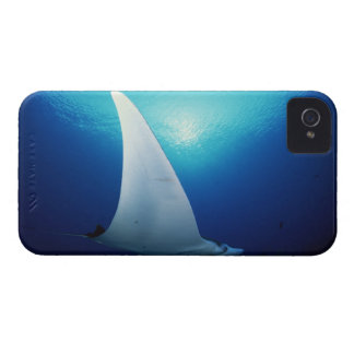 Underside of a manta ray iPhone 4 cases