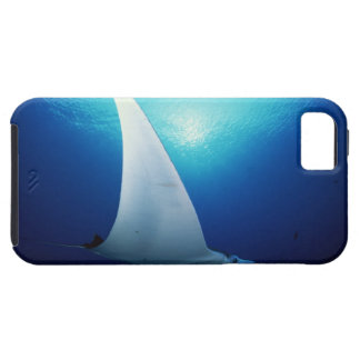 Underside of a manta ray iPhone 5 cover
