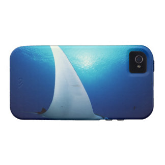 Underside of a manta ray iPhone 4 case