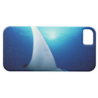 Underside of a manta ray iPhone SE/5/5s case