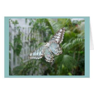 Underside of butterfly - Kew Gardens Card