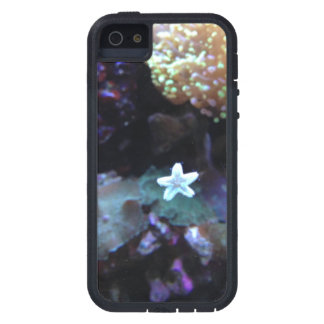 Underwater Baby Starfish iPhone 5 Case