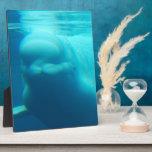 Underwater Beluga Whale Display Plaque