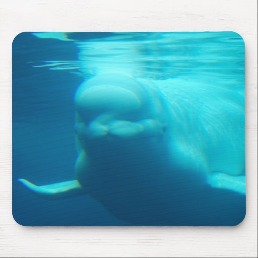 Underwater Beluga Whale Mouse Pad