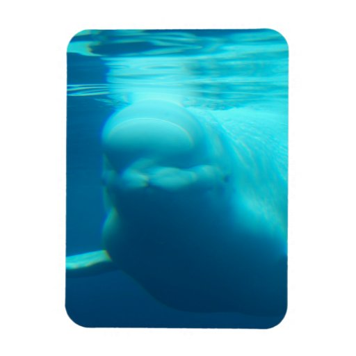 Underwater Beluga Whale Rectangle Magnet