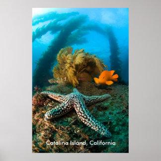 Underwater Catalina Island, California Poster