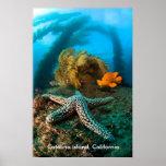 Underwater Catalina Island, California Posters