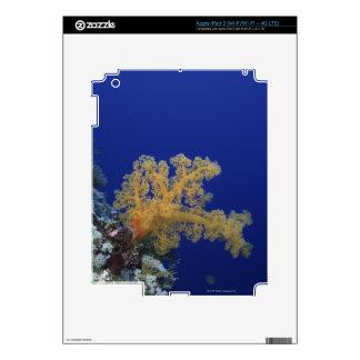 Underwater Coral iPad 3 Skins