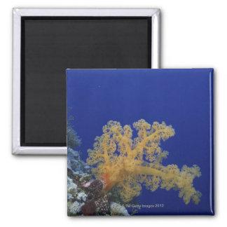 Underwater Coral Magnet