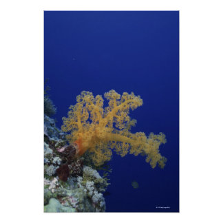 Underwater Coral Poster