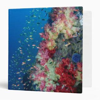 Underwater coral reef, Indonesia Binder