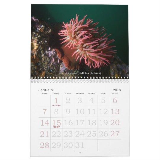 Underwater Journeys 2008 Calendar
