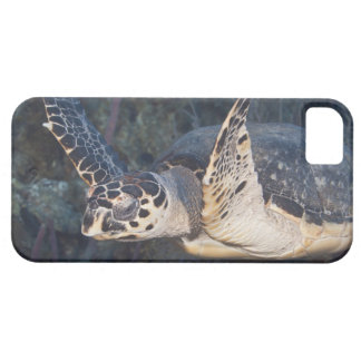 Underwater Life: A Hawksbill Sea Turtle 2 iPhone 5 Case
