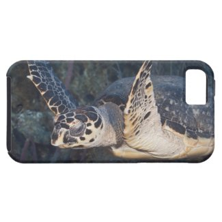 Underwater Life: A Hawksbill Sea Turtle 2 iPhone 5 Case