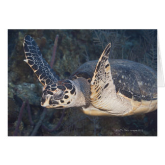 Underwater Life: A Hawksbill Sea Turtle 2 Greeting Card
